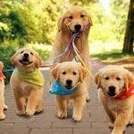 Cachorros y sus distintos comportamientos