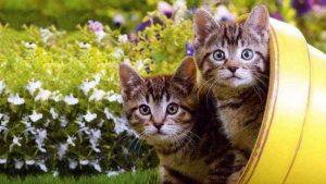 Consejos para apartar gatos de los jardines
