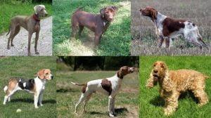 Historia de Perros de Caza