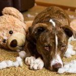 Consejos del comportamiento neurótico de los perros