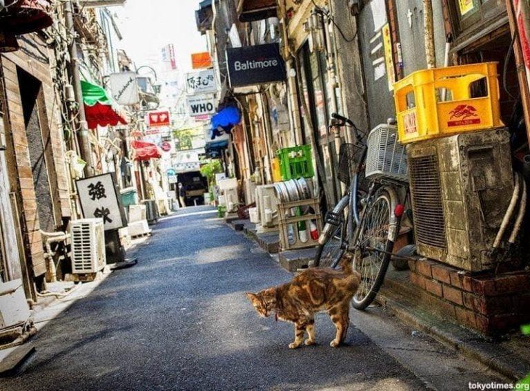 Como tranquilizar un gato callejero