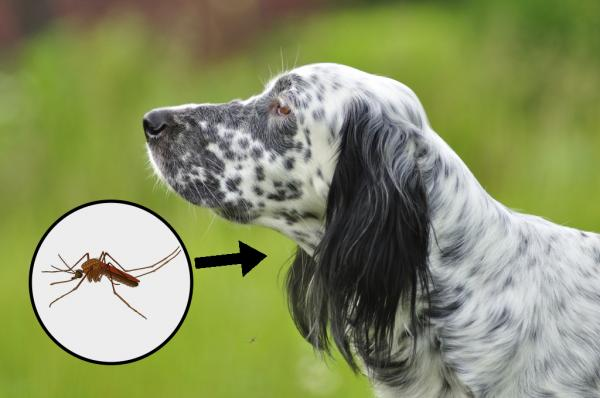 Consejos para la picadura de insectos en cachorros