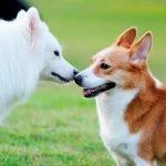 La agresividad en perros machos castrados