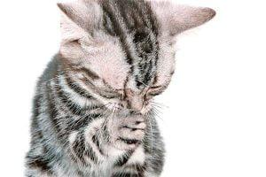 Gatos con nariz tapada