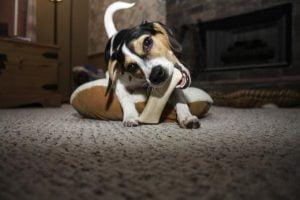 Como alejar a su perro de sus zapatillas