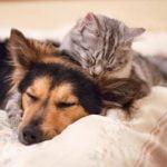 Consejos para criar perros y gatos