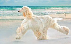 Consejos para el pelaje brilloso de su perro