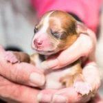 Consejos sobre cachorros recién nacidos que mueren