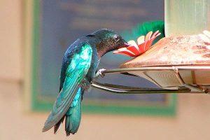 Cómo atraer a las aves salvajes