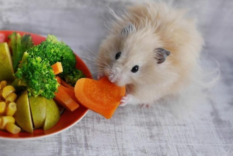 Alimentación de un hámster