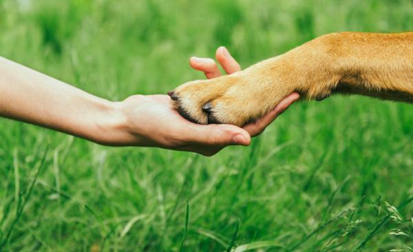 Consejos para uñas infectadas caninas