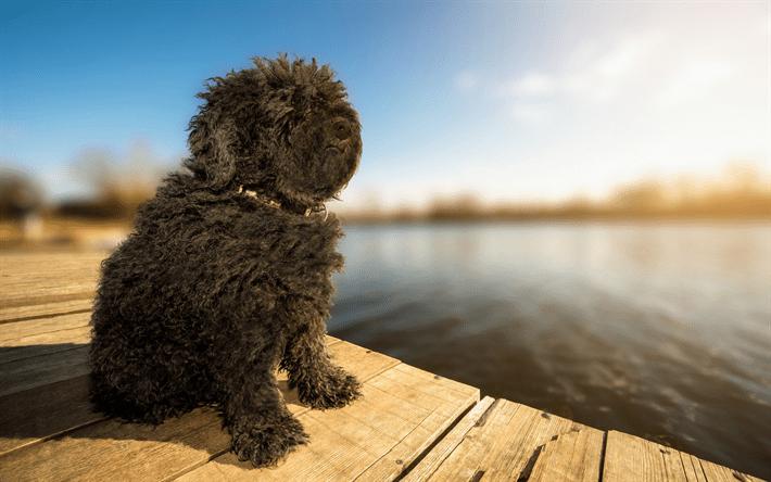 Características del Perro Puli