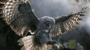 Aprendiendo sobre los Búhos o Lechuzas