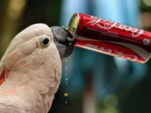 Alimentos tóxicos para las aves