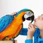 Cuando la mascota es un ave exótica
