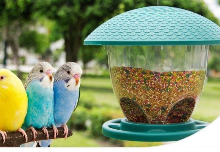 Alimentos para aves