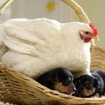 Como abrigar a un cachorro recién nacido