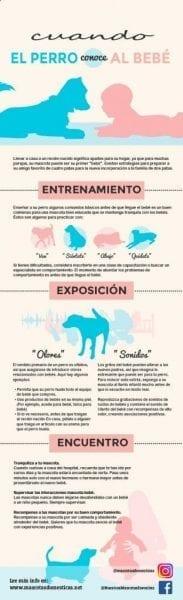 #Infografía Cuando el perro conoce al Bebe