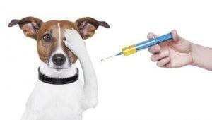 Importancia de las vacunas en los perros