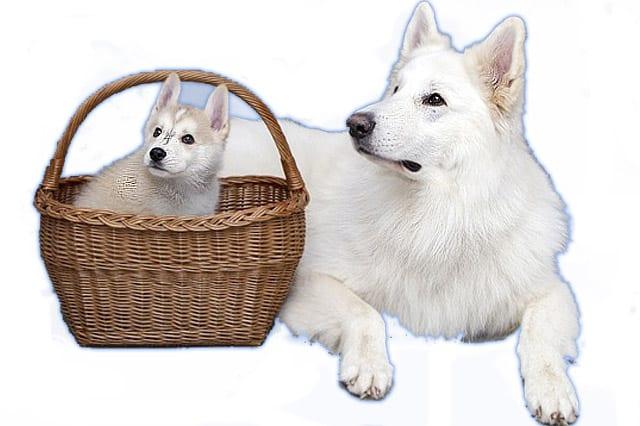 Edad de los perros por raza